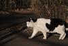 K_1_3046.jpg (akahigeg) Tags: 猫