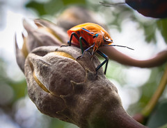 Heyhey! (tasmonia) Tags: nature macro greeting insects macromonday bokeh