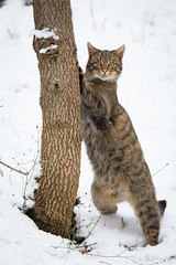 Standing besides a tree