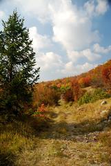 Mountain Path (roksoslav) Tags: krasno velebit 2008 svetište nikon d80 sigma18125mm put staza