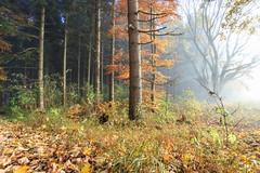 Misty (MSPhotography-Art) Tags: lichter night schwäbschealb deutschland landscape landschaft burg burghohenzollern germany outdoor natur clouds badenwürttemberg albtrauf wanderung wandern sterne swabianalb nature hohenzollern wolken alb