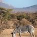 Samburu Kenya-189.jpg
