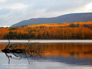 Autumn Glory - Loch Insh