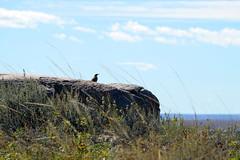 American Prairie Reserve 5