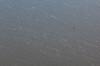 Frontenac Eagle (Tony Webster) Tags: frontenac frontenacstatepark lakepepin minnesota mississippiriver eagle flying inflight march river riverbluffs spring statepark unitedstates us