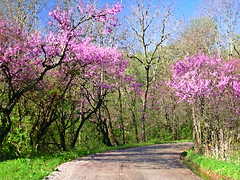 Returning Home -- Painterly Version (CountryDreaming) Tags: road trees ohio painterly spring bend hockinghills springtime redbud middleearth blooming