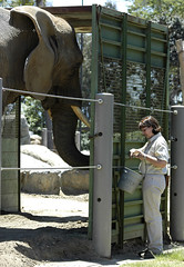 feeding time (Worker101) Tags: elephant zoo feeding