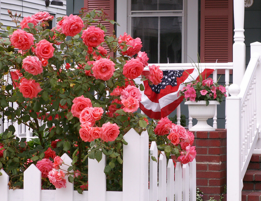 Spirit of Memorial Day Roses