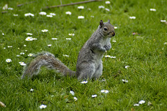 squirrel2 (bea2108) Tags: animal animals squirrel