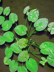 Green - by zanzibar