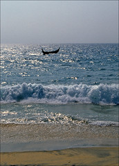 fishing boat at sea (Ron Layters) Tags: sea india beach geotagged waves slide kerala transparency fishingboat pentaxmz10 godsowncountry samudra thiruvananthapuram flickrfly ronlayters geo:lat=840155 geo:lon=7697145 slidefilmthenscanned