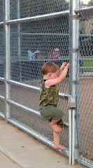 going up (Paul L Dineen) Tags: boy green sports kids fence children climb kid child baseball climbing littleleague firebolts bennettfirebolts smnotchecked