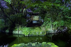 200606013a (DRI) (hiro7261) Tags: reflection nature japan night d50 ilovenature tokyo moss nikon dri zenpukujipond