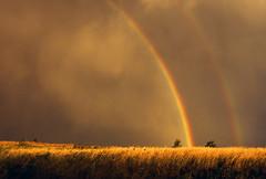 gold! - nature rainbow fcrnbws gtagtag doublerainbow fc.rnbws gold
