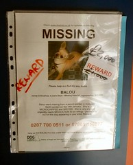 Missing poster (finkangel) Tags: dog london geotagged missing location tesco gps kingscross geo reward fink finkangel geotag lostdog missingdog yahoomaps missingposter tescometro largereward gpslocation onmap geotargetted geotarget