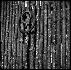 Mike's Fence (Voxphoto) Tags: blackandwhite bw fence log squareformat sq agfaapx100 superbaldax 6x6folder artfullydisarranged projectmaw
