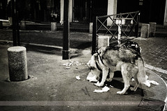 Dog, Paris, France (Seven Seconds Before Sunrise) Tags: street city travel urban bw dog paris france garbage europe
