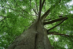 Squirrel Cam (Splatadude) Tags: trees leaves clumberpark