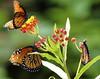 Three Queens (Justin Berman Photography) Tags: flower macro nature digital butterfly nikond70s 85points score57 top20flowersandbugs cm086 tamronf2890mmmacro