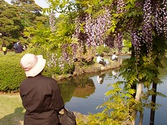 looking at wisteria (michenv) Tags: 2003 flowers flower japan digital tokyo japanesegarden shinjuku asia michelle olympus  nippon   digitalcamera  orient camedia  nihon shinjukugyoen digitalphotos digitalphotography olympuscamedia camediaseries    olympusdigital olympusc50z  michenv olympusx2 michenv2003