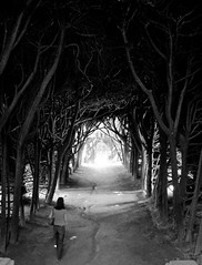 tree tunnel (lanier67) Tags: light shadow tree portugal real tunnel vila vilareal