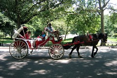 NYC - Central Park: Horse drawn carriage (wallyg) Tags: park nyc newyorkcity horse ny newyork nhl carriage centralpark manhattan landmark gothamist horseandcarriage horsedrawncarriage carriageride nationalhistoriclandmark nationalregisterofhistoricplaces visvis usnationalhistoriclandmark nrhp usnationalregisterofhistoricplaces newyorkcitylandmarkspreservationcommission nyclpc sceniclandmark hansomecab
