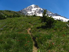 Mount Hood Wildflowers (shredmaximus) Tags: oregon hiking wildflowers mounthood