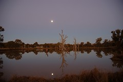 moon reflection (michenv) Tags: trees moon reflection tree slr night digital ilovenature interestingness nikon d70 nikond70 michelle australia 123 2006 explore slowshutter exploreinterestingness nightshots digitalcamera dslr  nikondigital digitalslr digitalphotos digitalphotography slowshutterspeed albury deadtrees osanpocamera    nikonslr 4aces nikondslr interestingness421 i500  theworldthroughmyeyes twtme michenv explore12jul06 michenv2006 michenvexplore