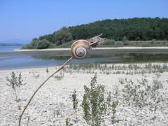 P7150271 (fakafaka) Tags: snail caracol landa barraskiloa txirrindularitza landa2006