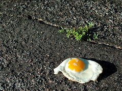 Hot enough to fry an egg (Pockafwye) Tags: food hot minnesota fry pavement egg sidewa