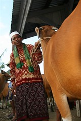 Man with his cattle, Lombok, Indonesia (Eric Lafforgue) Tags: indonesia lombok indonesi indonesien indonsia  indonsie  indonezja lafforgue indoneesia lombock ericlafforgue   lafforguemaccom mytripsmypics endonezya  indonezija   indonzia indonezia indnesa  indonzija indonezio indoneziya indonisa