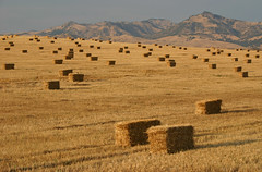 Rural Conformity (Beefus) Tags: california ranch rural farming hay agriculture bales conformity ranching hollister sanbenitocounty sanbenito