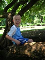 The tree in Trevett-Finch Park (Crystl) Tags: thursday sillyboy champaignillinois ilovethistree trevettfinchpark