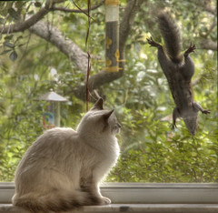 Afternoon Entertainment (lynne bernay-roman) Tags: window jumping squirrel watching kitty entertainment ledge leaping supershot frontpageexplore abigfave