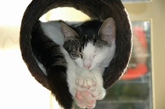 Sweet Nova.... (Margot) Tags: cats nova tag3 taggedout cat tag2 tag1 cylinder ggg01 margotpouw margot