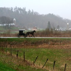 to lead an amish life (thermophle) Tags: county horse mist rain misty wisconsin rural canon square amish rainy buggy vernon hwy33 driftless thermophle organicandgmofreeusa