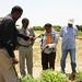 Dr. Mohamed Hassan, Hon. Omer Farah, Dr. Segenet Kelemu and Mr. Ahmed Jama - Demonstration plot for Brachiaria