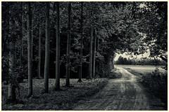 Juvigny (Eric@focus) Tags: noiretblanc blackwhitephotos bw juvigny france countryside rural track field trees greatphotographers flickrelite 1500v60f 100com500views25favs distinguishedblackandwhite neroametà