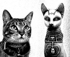 Mitsy & Bastet (Raul Jaso) Tags: blackandwhite bw cats byn blancoynegro cat blackwhite chats gato gata felinos felino biancoenero bastet leschats dmcfh8 panasonicdmcfh8 rauljaso rauljasofotografia rauljasophotography