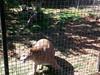 20150919_113010 (mjfmjfmjf) Tags: oregon zoo 2015 greatcatsworldpark