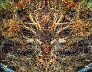 Demon Roots