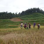 Wanderung in den Reisfeldern von Sapa