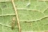 Elegantly Robed (Eric Gitonga) Tags: macro male nature animal female danger forest mouth eyes legs kenya head web arachnid sting nairobi spin egg grow silk kingdom sperm karen exoskeleton segment hunter prey fangs predator stinger moult carnivorous arthropods animalia arthropoda spinner eightlegs develop venom misunderstood spun abdomen segmented fertilization compoundeye 8legs phylum exuvia instar spinneret simpleeye ericgitonga ngongroadforestsectionone
