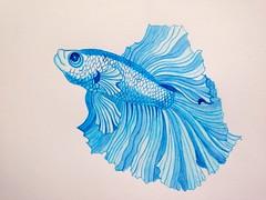 Tribute to Sanjanasart (deerskin666) Tags: blue fish art illustration painting fanart watercolour bluefish watercolourpainting fishpainting