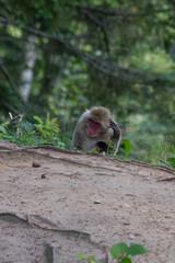Thinking (Bloui) Tags: animal mammal zoo august québec macaque japanesemacaque 2015 macacafuscata stfélicien borealie saintfélicien macaquejaponais zoosauvage eos7d boréalie