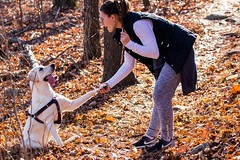 Do I get a treat if I give you my paw?!? Yup and a stick too!!! (F.P Photo) Tags: dog love forest paw woods lab girlfriend yellowlab hiking saturday hike trail labradorretriever puppylove traildog