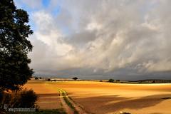 campos-del-Temple (Lucas Gutirrez) Tags: cereales agrn paisajesdegranada granadanatural alhamatemple lucasgutierrezjimnez