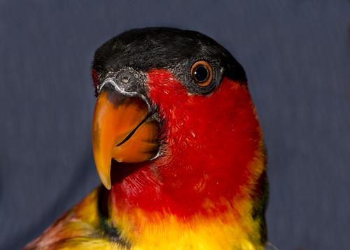 Thumbnail from Wildlife World Zoo & Aquarium