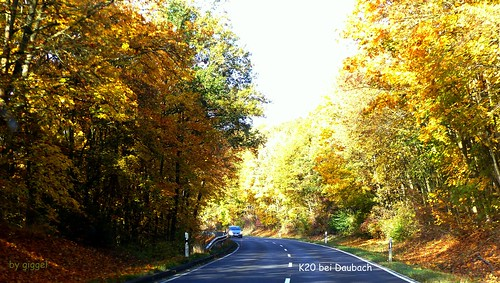 Sobernheimer Wald im Herbst