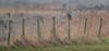 R16_5354 (ronald groenendijk) Tags: cronaldgroenendijk 2016 rgflickrrg animals asioflammeus bird birds birdsofprey europe groenendijk holland nature natuur netherlands outdoor owl owls ronaldgroenendijk roofvogels shortearedowl uil uilen velduil vogels wildlife